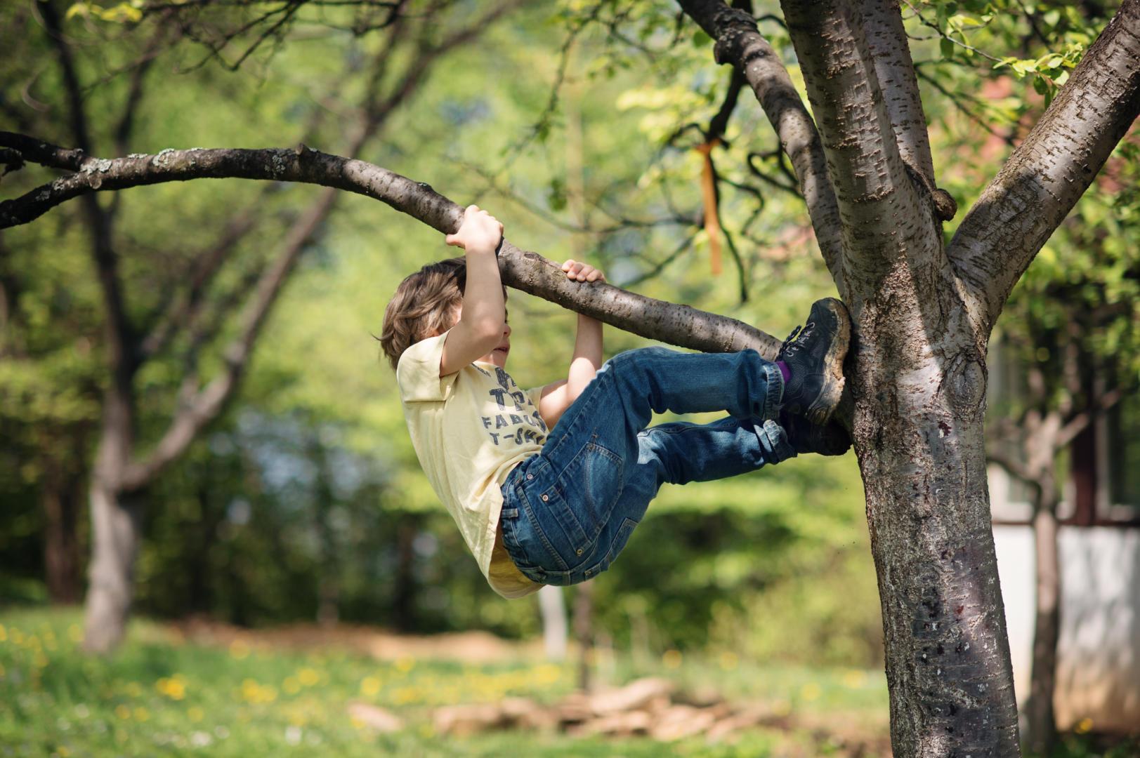 Junge klettert auf Baum
