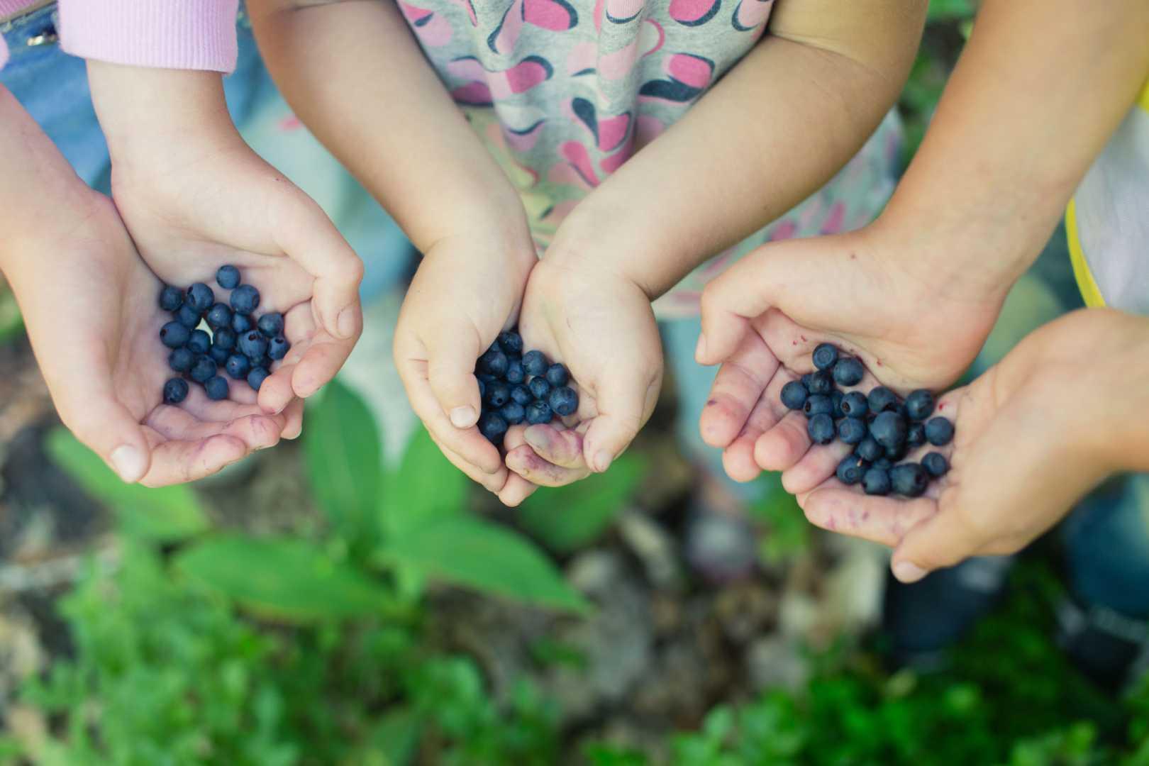 Nahaufnahme von Kindern, die frisch gepflückte Beeren in ihren Händen halten.