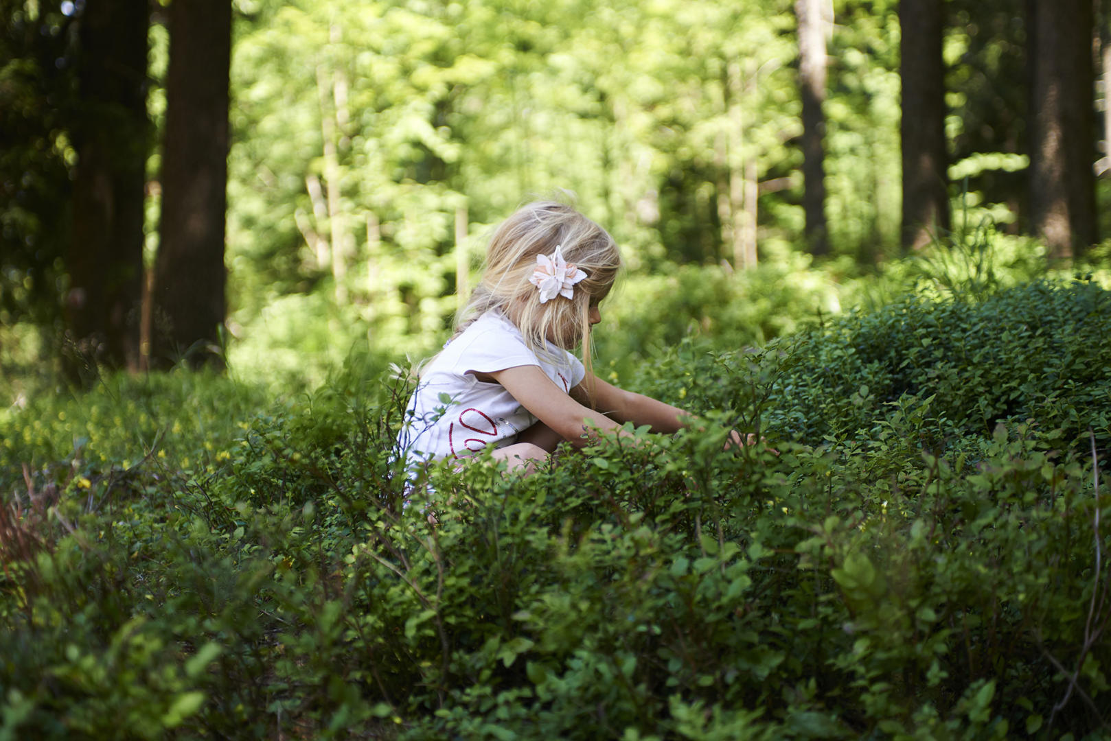 Blond little girl picking fresh berries on blueberry field in forest.