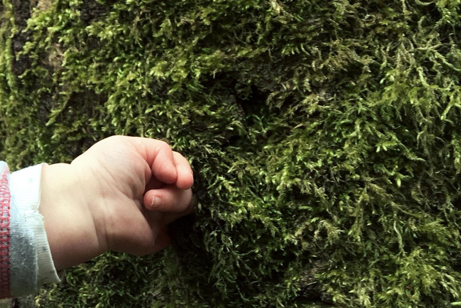 Baby-Hand berührt Baum mit Moss