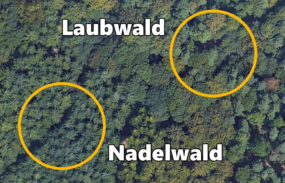 Wie man Laub und Nadelwald auf einem Luftbild erkennt