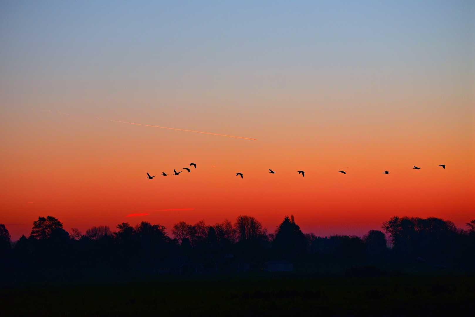 Sonnenaufgang mit Vögeln am Horizont