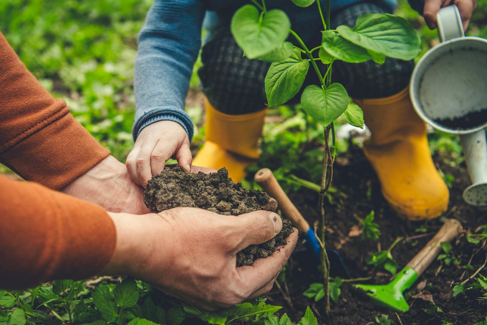 Ein Mann pflanz mit einem Kind einen Baum im Garten