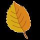 leaf-yellow